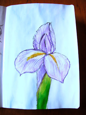 Iris illustration