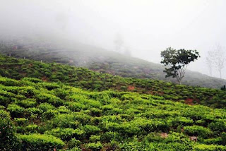Ooty (Best Honeymoon Destinations In India) 2