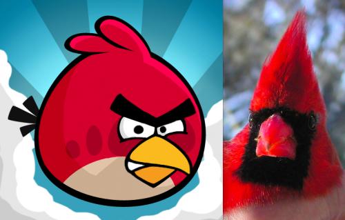 Northern Cardinal Angry Bird