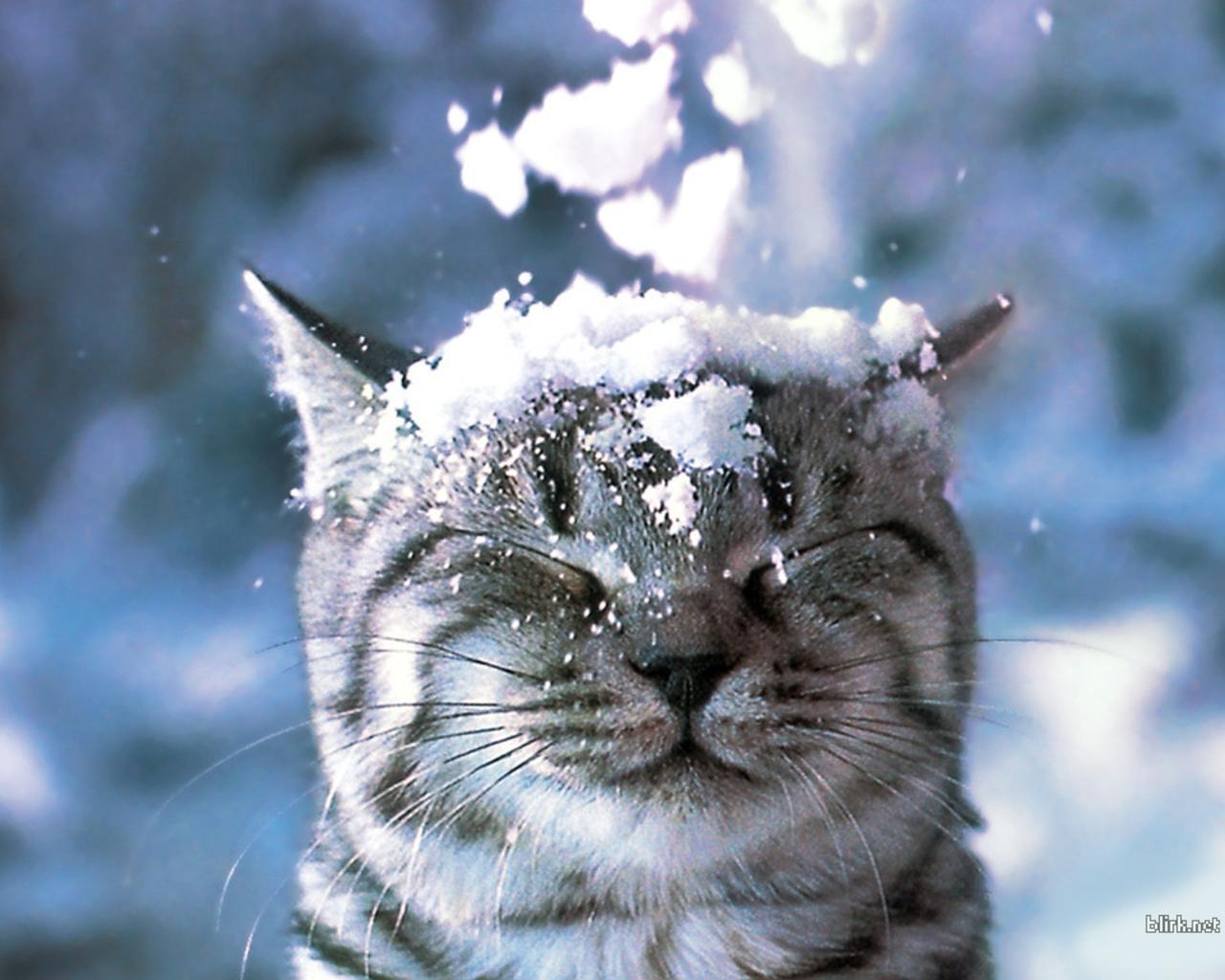 winter hintergrundbilder kostenlos - Winter Hintergrundbilder Wallpaper kostenlos Bilder Blog