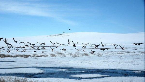 Безвизовый режим введен для коренных жителей Чукотки и Аляски