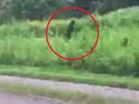 Seorang Turis Berhasil Menangkap Video Bigfoot