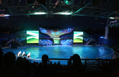 SeaWorld, Shamu, Orlando
