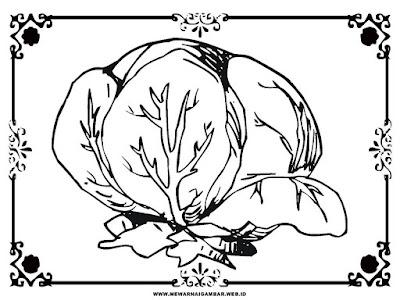 gambar sayur kol untuk diwarnai