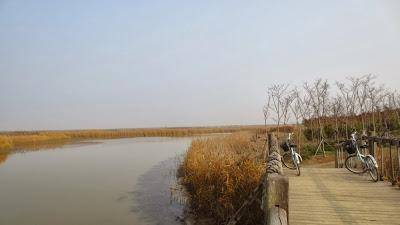 Shanghai Chongming - Dongtan Wetland Park