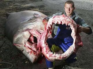 Cá mập giết người