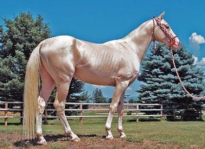 Ini Foto-foto Akhal Teke, Kuda Emas yang Hampir Punah