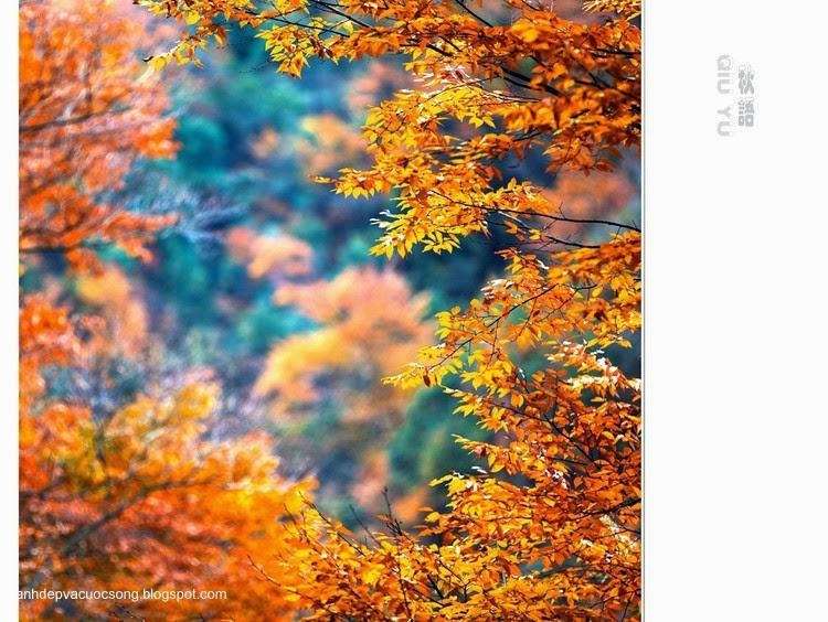 Chiếc lá mùa thu 12