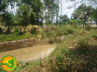 Horee!!... Ada Air mengalir di Sungai Bolang, Munjul, Pagaden Barat