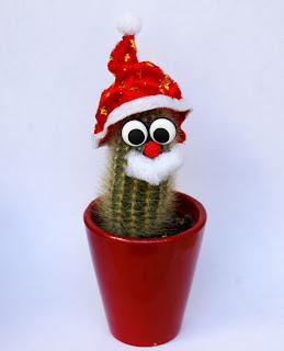La magia de las palabras plantas navide as for Cactus navideno