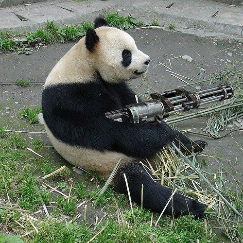 Funny panda with gun funny animal funny panda with gun voltagebd Choice Image