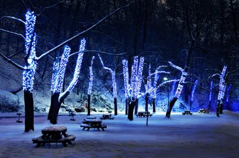 Decorus furnishings christmas lights httpwelsu20110811outdoor led christmas lights inspiredblue led christmas lights trees aloadofball Images