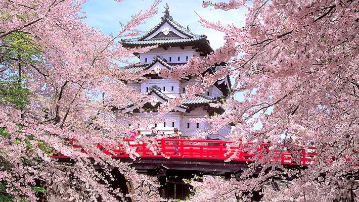 Giappone le foto pi belle della fioritura dei ciliegi - Foto della bandiera del giappone ...