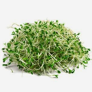 Tumbuhan Alfalfa
