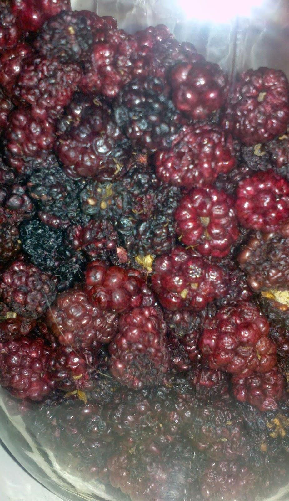 drying blackberries, how to preserve your blackberry harvest, dehydrating blackberries,