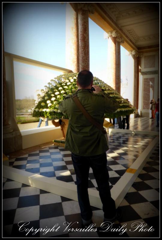 Ozukuri chrysanthemums Grand Trianon Versailles