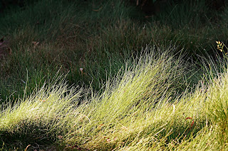 NATURAL TEXTURES grass meadow.jpg