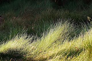 NATURAL TEXTURES grass meadow.jpg
