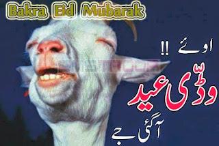2013 Bakra Eid,Cow Qurbani,Camel Sacrifice,Goat Slaughter,Eid al Adha