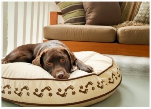 Dog Pillow Bed
