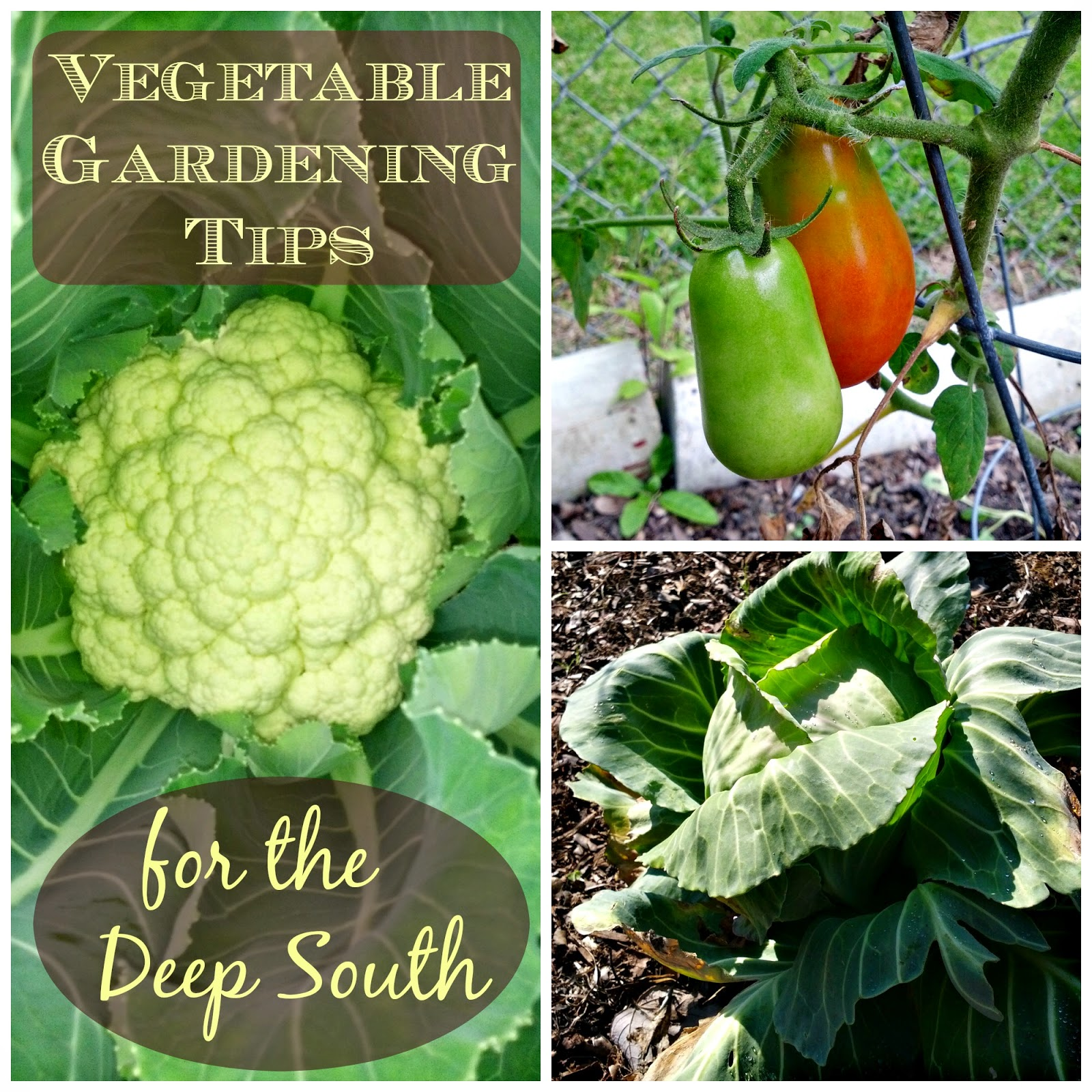 Greneaux gardens vegetable gardening tips for the deep south for Gardening 101 vegetables