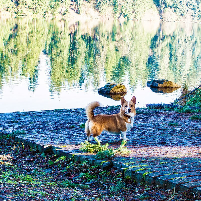 Corgi Lake Wilderness Maple Valley