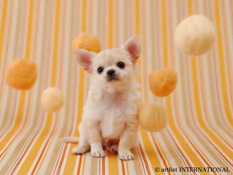 Cute Dogs 7