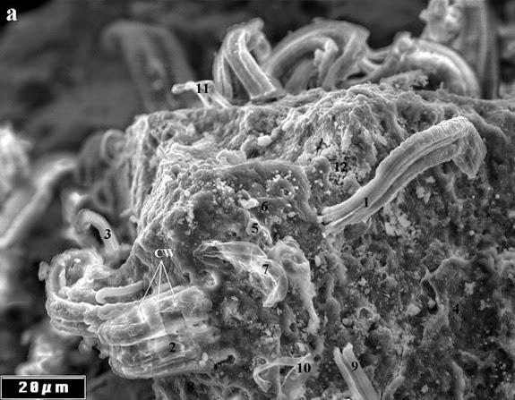 meteorite-microorganisms