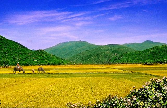 Những hình ảnh đẹp về Bình Định, canh dong que thanh binh