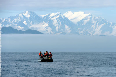 American Safari Cruises in Alaska