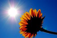 Lumina solara, indispensabila pentru viata si pastrarea sanatatii
