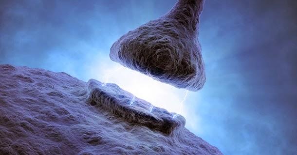 Descoberto gene que pode proteger das doenças neurodegenerativas