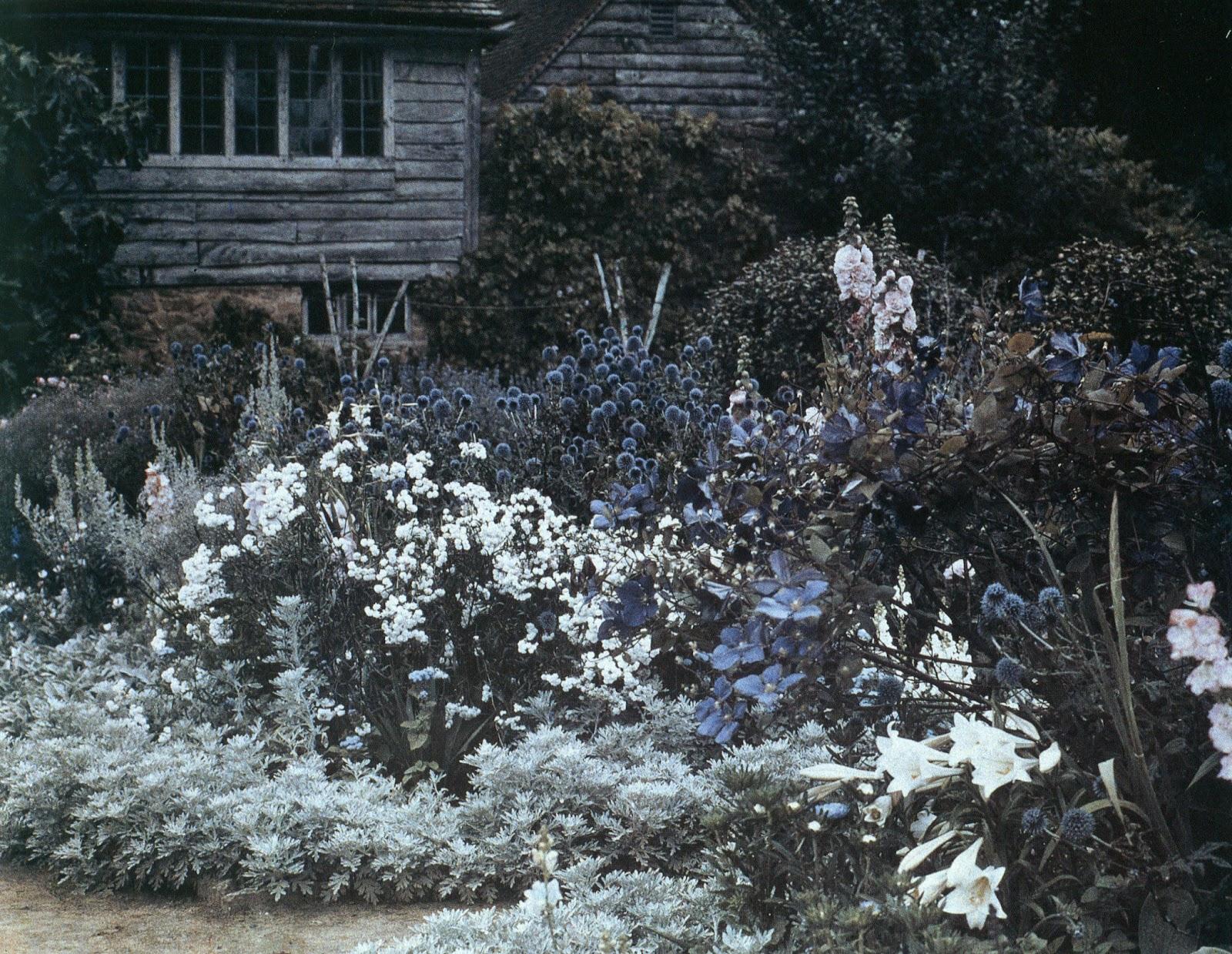 Velvet nectar gertrude jekyll for Gertrude jekyll garden designs