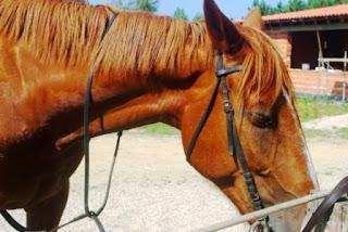 Cudillero, Aventuras a caballo, Sable