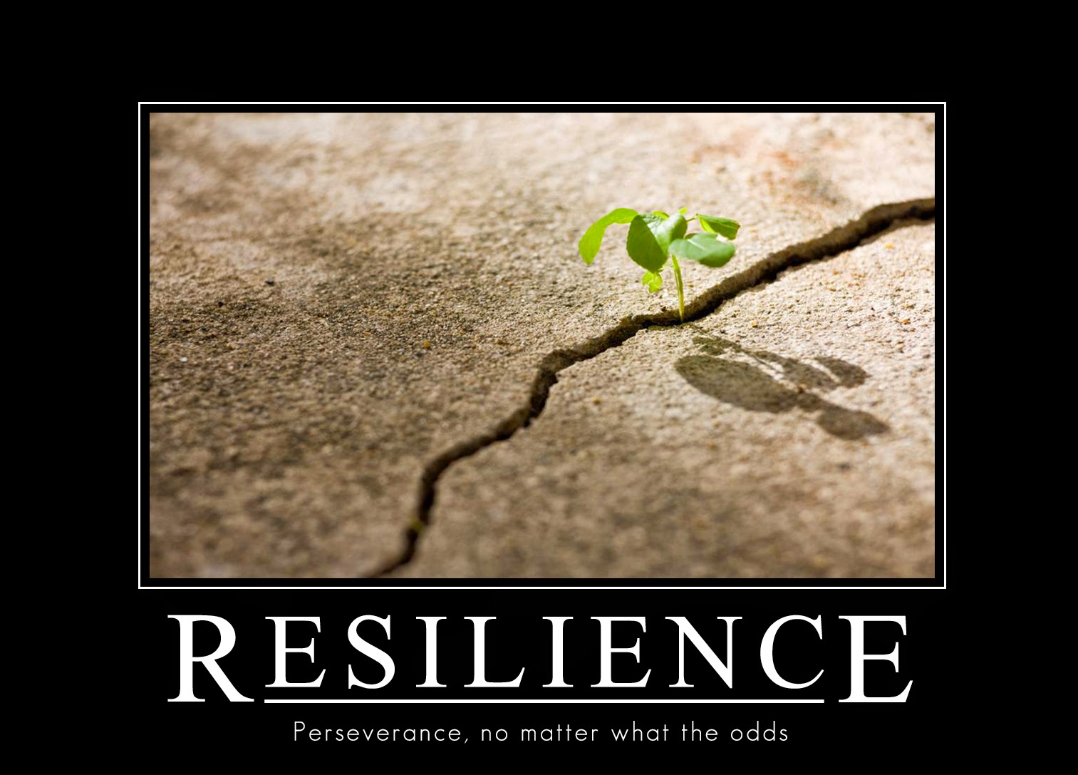Resilience Quotes Club Master Hoang Post 198 Continued Eight Birds The Condor