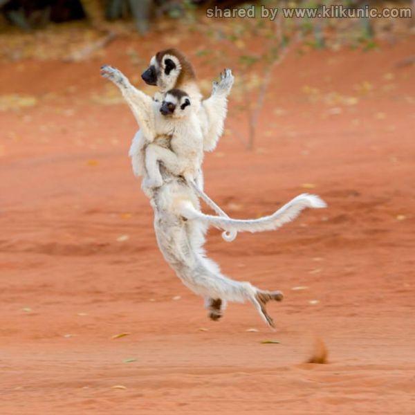 http://4.bp.blogspot.com/-TMS625Pv5io/TXzGBKGt_9I/AAAAAAAARF4/7ACiMLizt-E/s1600/these_funny_animals_635_640_33.jpg