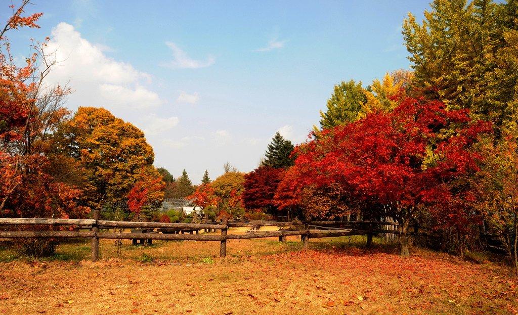 ... Share Anything In Our Life: Beberapa Tempat Wisata Korea Yang Terkenal
