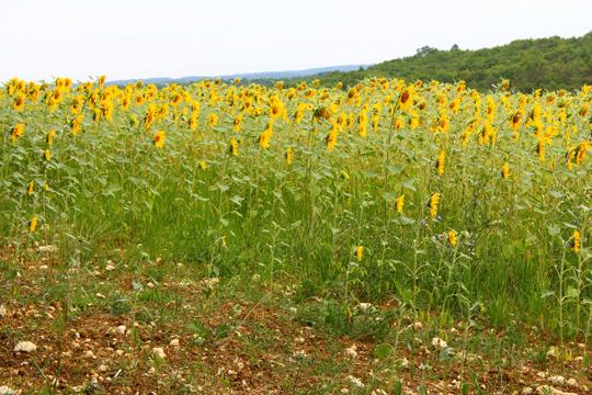 Dordogne Travel