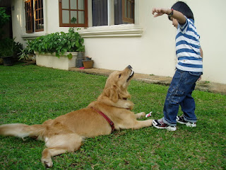Hukum Memelihara Anjing Tanpa Ada Keperluan