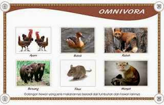 Gambar-gambar Hewan Omnivora