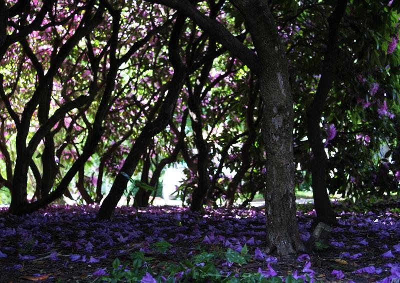 Kaunis puisto ruotsissa