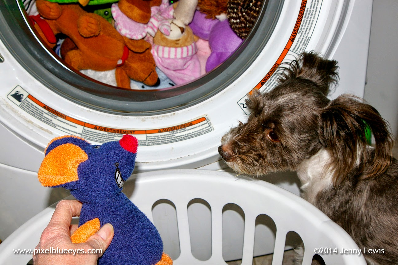 Pixel looking at a toy that doesn't want to go into washer