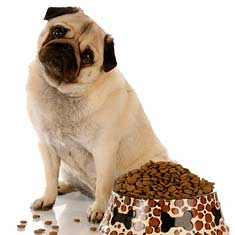 What Is The Best Dog Food