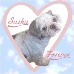 Sasha RIP