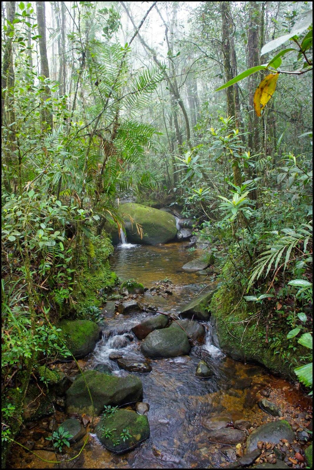 Mt. Kinabalu botanical garden