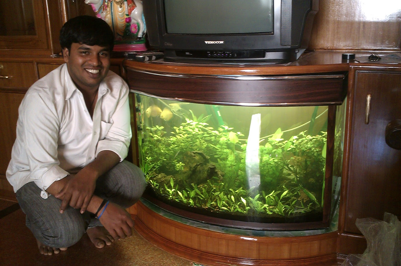 Fish tank maintenance services in bangalore 2017 fish for Fish tank cleaning service