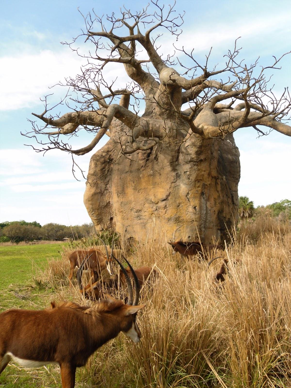 Orchestra Baobab* Orchestre Du Bawobab - Ndeleng Ndeleng