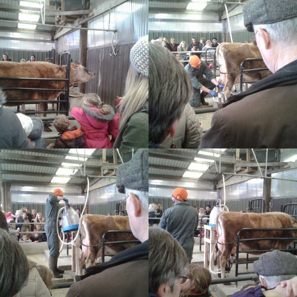 the milking demo