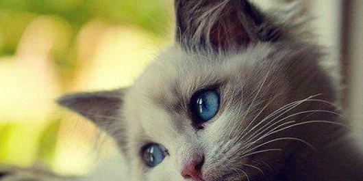 Islam Agamaku Wanita Yang Masuk Neraka Karena Seekor Kucing