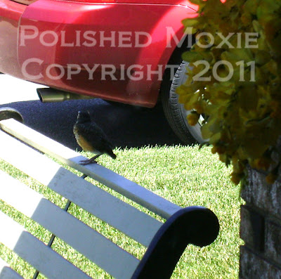 Picture of baby robin sitting on the back of a bench